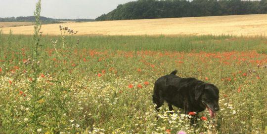 Enjoy a walk along Peddars Way in Norfolk