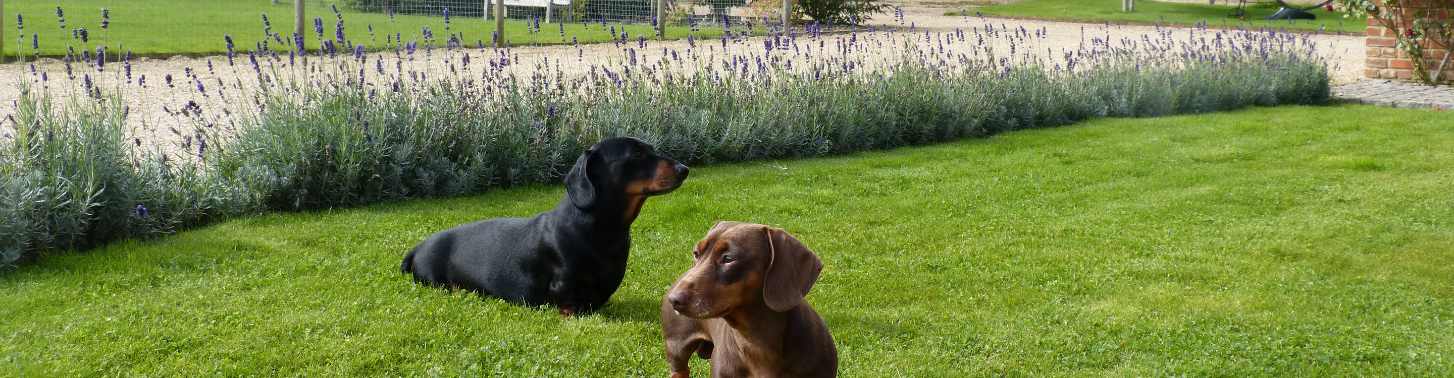 West Heath Barn, dogs are welcome at our self catering accommodationin Norfolk