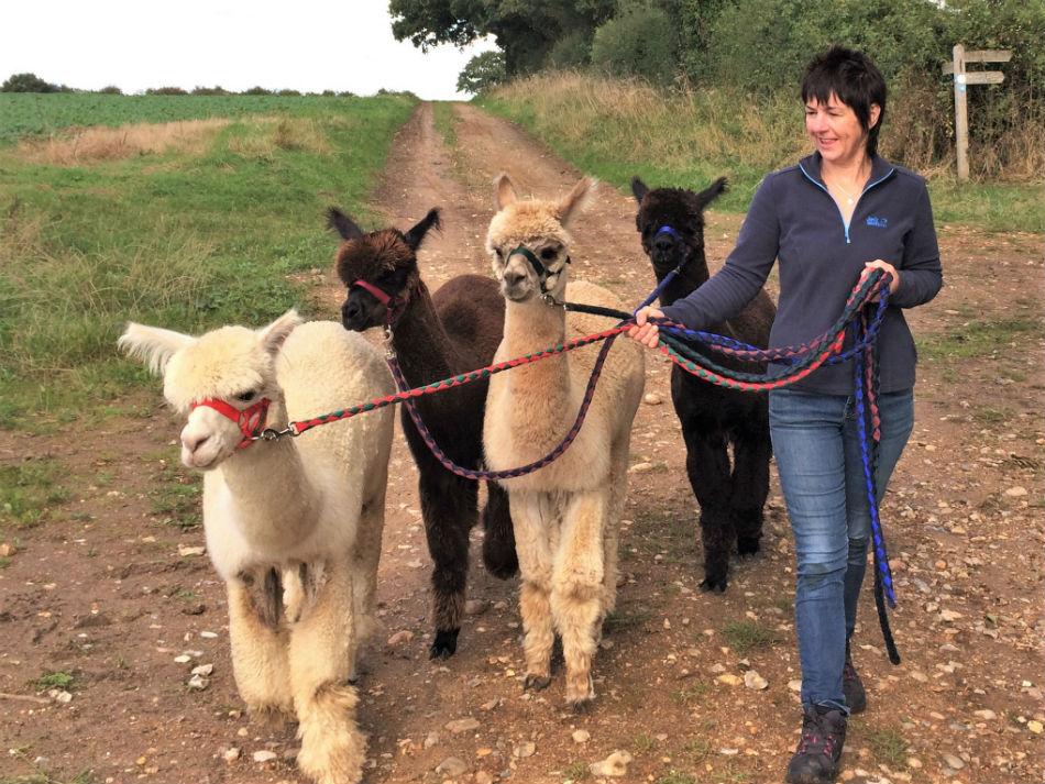 Enjoy a walk on Peddars, miles of unspoilt Norfolk countryside
